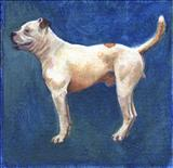 Harvey by Claire Bergin, Painting, Acrylic on board